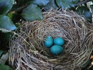 bird-nest-560384_1280